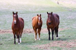 3 Working Horses