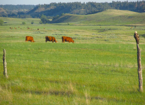 Birds Thrive on our Rangeland